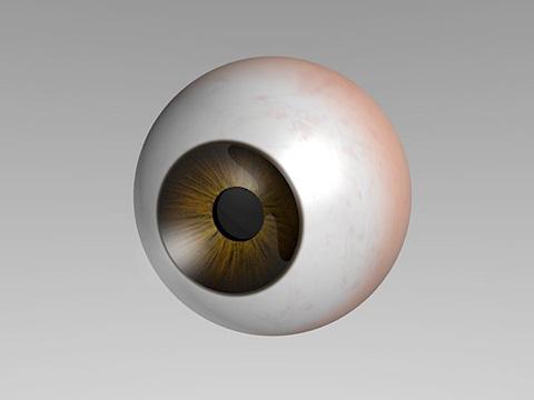 強膜・虹彩・瞳孔