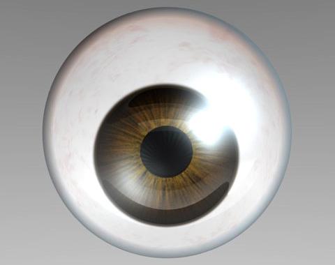 人体/眼球のレンダリング仕上がり見本