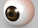 人体/眼球の作成
